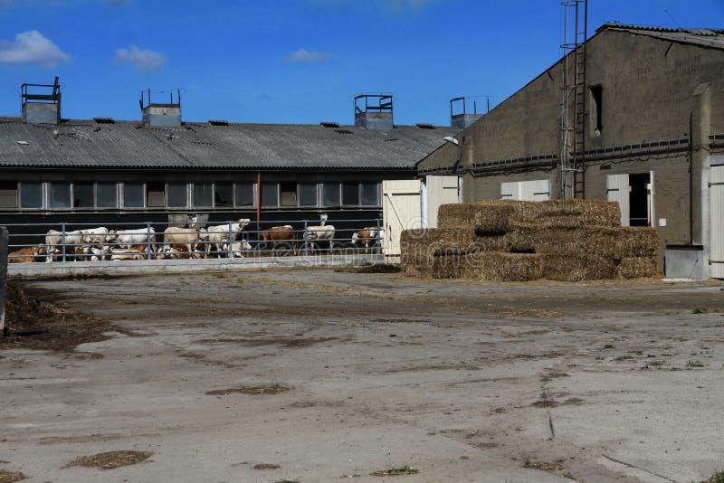 Une ferme avec des vaches image libre de droits