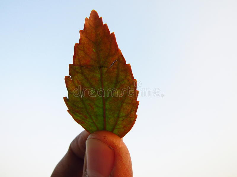 Une feuille image stock
