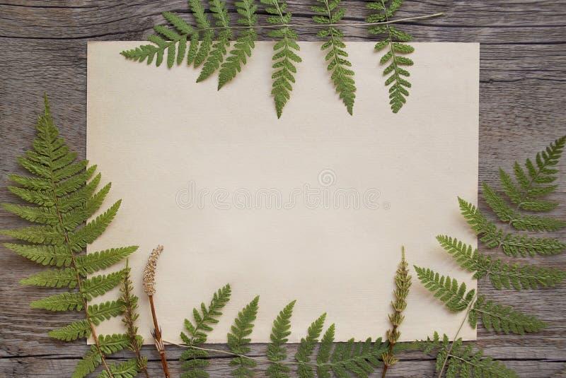 Une feuille de papier vieilli, encadrée de feuilles de fougères photos stock