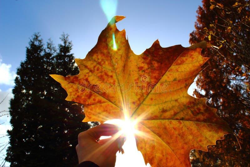 Une feuille jaune avec le soleil photographie stock libre de droits