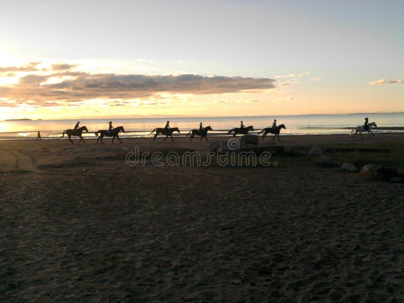 Une ficelle des cavaliers sur une plage de coucher du soleil photos libres de droits
