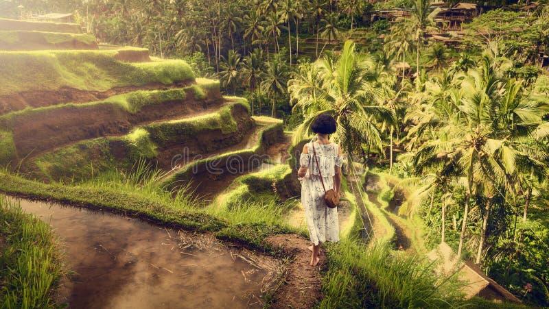 Une fille dans une robe blanche sur les terrasses de riz de Tegallalang Voyage de Bali Horizontal tropical photo stock