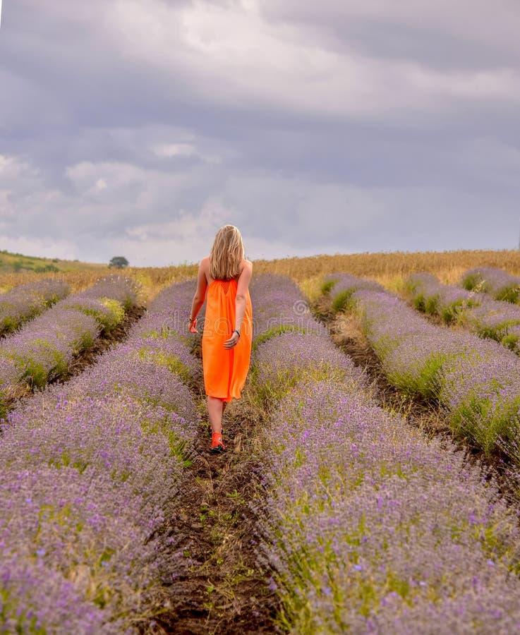 Une fille dans une robe orange lumineuse marche à travers le gisement de lavande avec elle de nouveau au photographe images stock