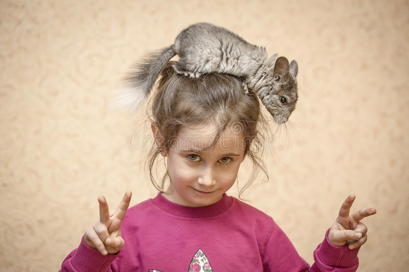 Une fille et un chinchilla photographie stock
