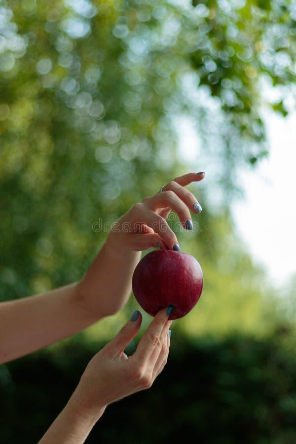 Une fille tient une pomme dans des ses mains Doigts admirablement incurvés photo libre de droits