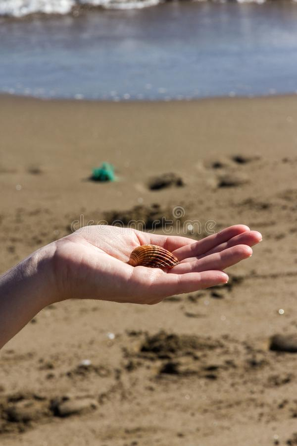 Une fille tient Shell On Her Hand photographie stock