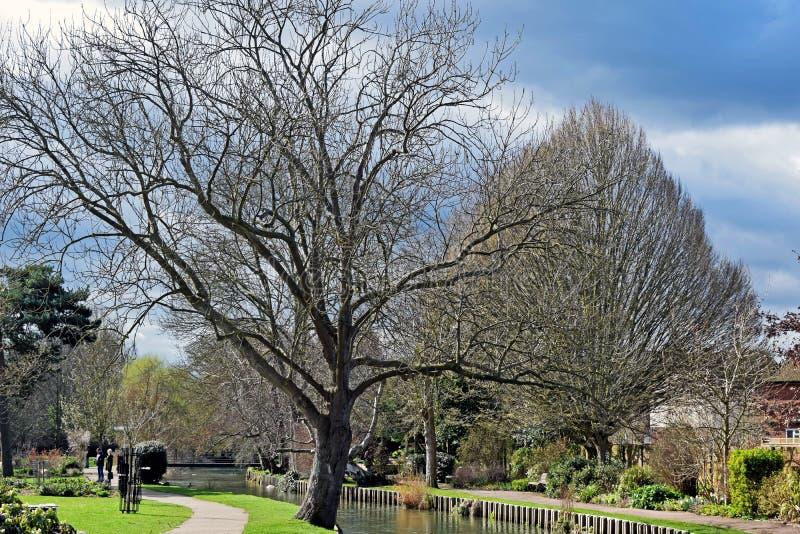Une fin d'un arbre très grand photos libres de droits