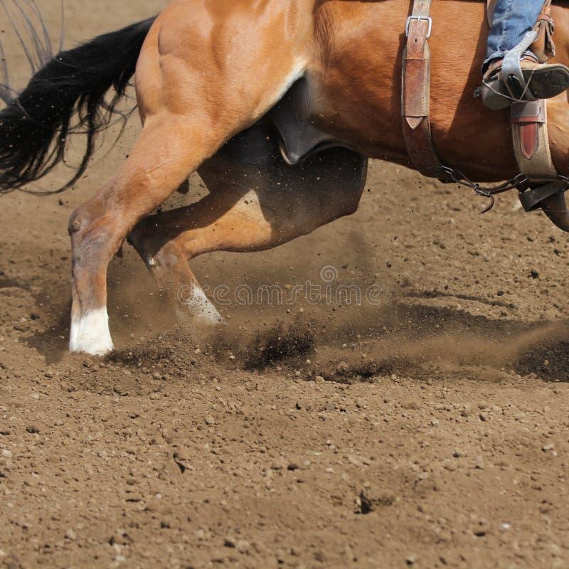 Une fin vers le haut de vue d'une saleté courante rapide de cheval et de vol photo libre de droits