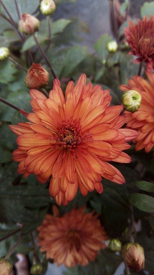 Une fleur photo libre de droits