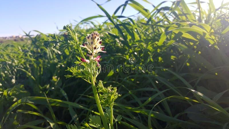 Une fleur photographie stock