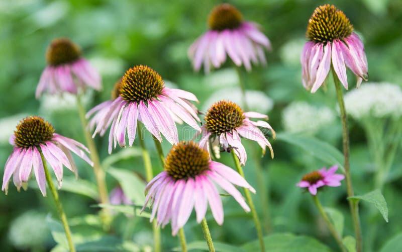 Une fleur a accentué avec l'acuité photos stock
