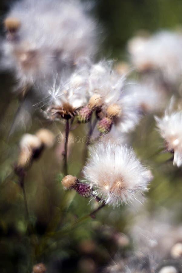 Une fleur après la floraison photographie stock