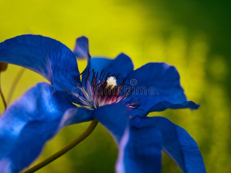 Une fleur bleue avec hors du fond de foyer images stock