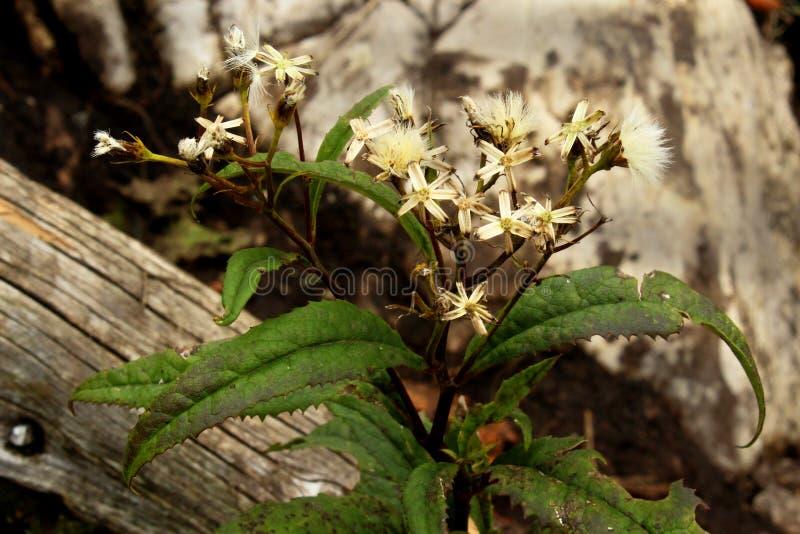 Une fleur dans les montagnes photographie stock