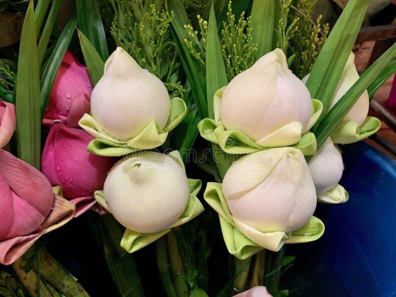 Une fleur de lotus blanche et rose pour le culte images stock
