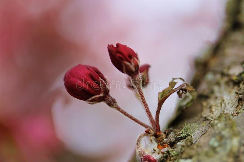 Une fleur de printemps - un nouveau début photos libres de droits