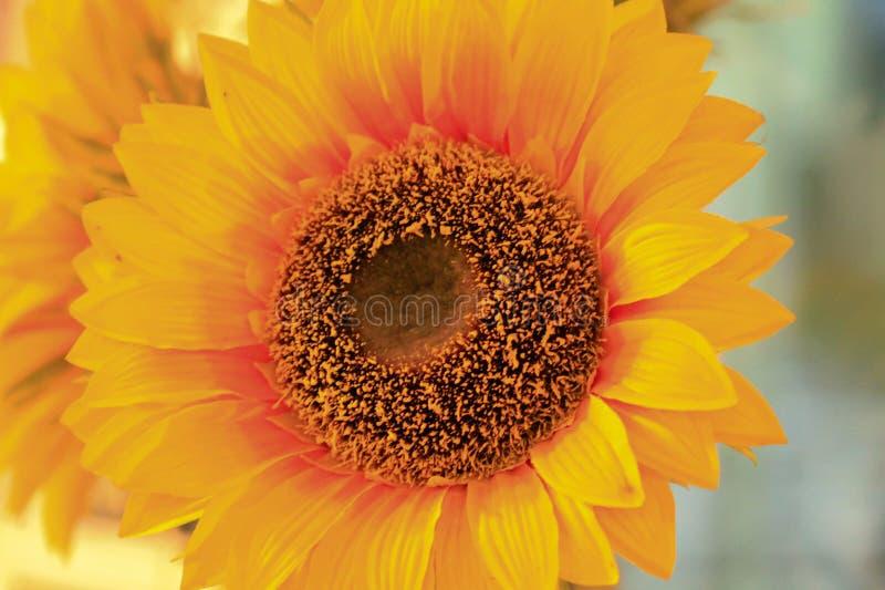 Une fleur ensoleillée images libres de droits
