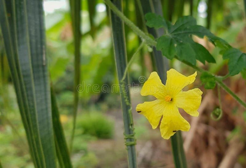 Une fleur jaune se tient du fond vert de feuilles photographie stock
