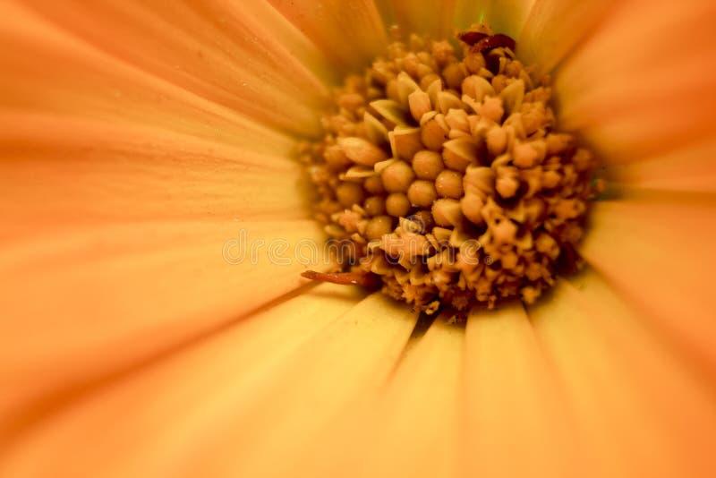 Une fleur orange Fin vers le haut photo stock