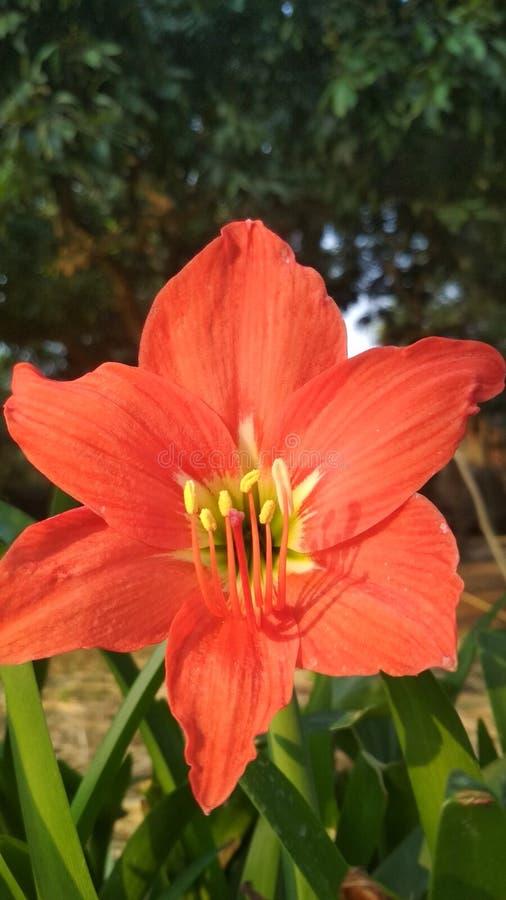 Une fleur rare en nature images libres de droits