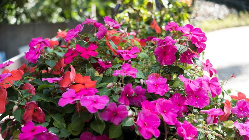Une fleur rose générique générique dans un jardin images libres de droits