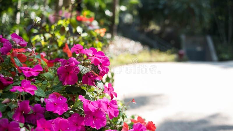 Une fleur rose générique générique dans un jardin image libre de droits