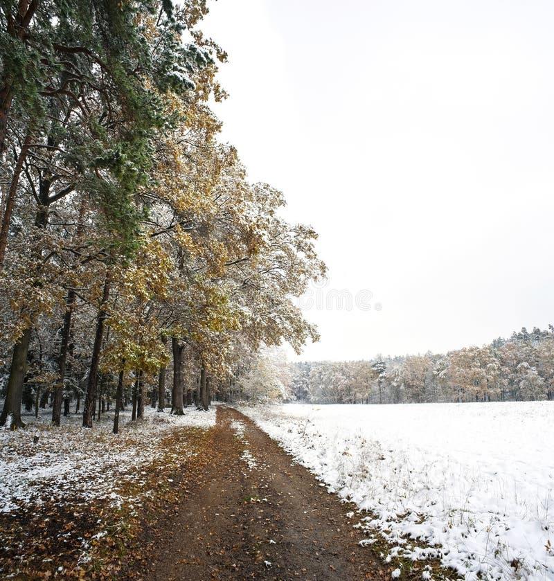 Une forêt de l'hiver photographie stock libre de droits