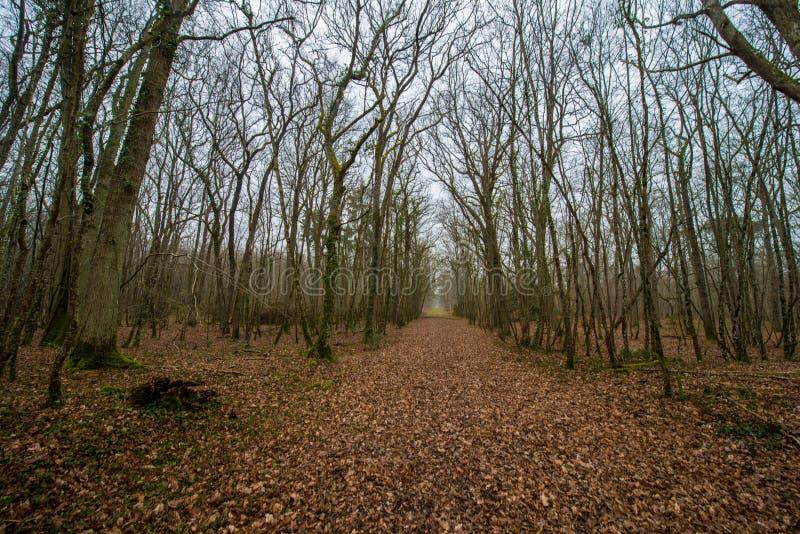Une forêt mystérieuse avec des feuilles sur le plancher dans les Frances image stock