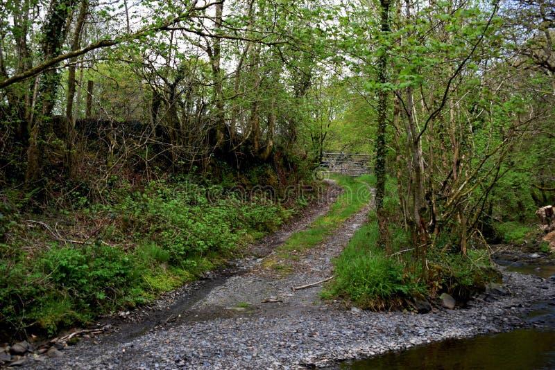 Une fourchette dans la voie dans un secteur de région boisée, par un courant avec un bon nombre d'herbe verte et d'arbustes arbre images libres de droits