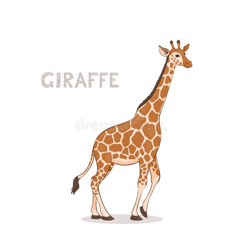 Une girafe de bande dessinée, d'isolement sur un fond blanc blanc animal de vecteur de fonds d'image d'alphabet illustration libre de droits
