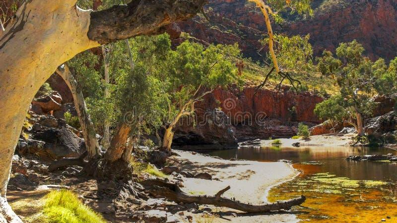 Une gomme de fantôme au point d'eau à la gorge d'ormiston dans les gammes occidentales de macdonnell photo libre de droits
