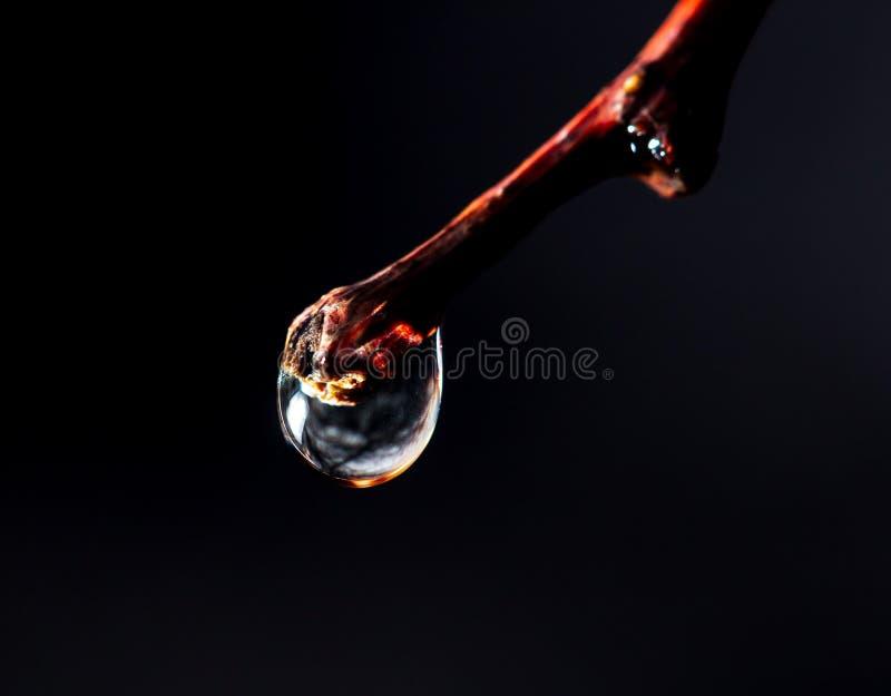 Une goutte de l'eau sur une branche d'arbre sur un fond noir image libre de droits