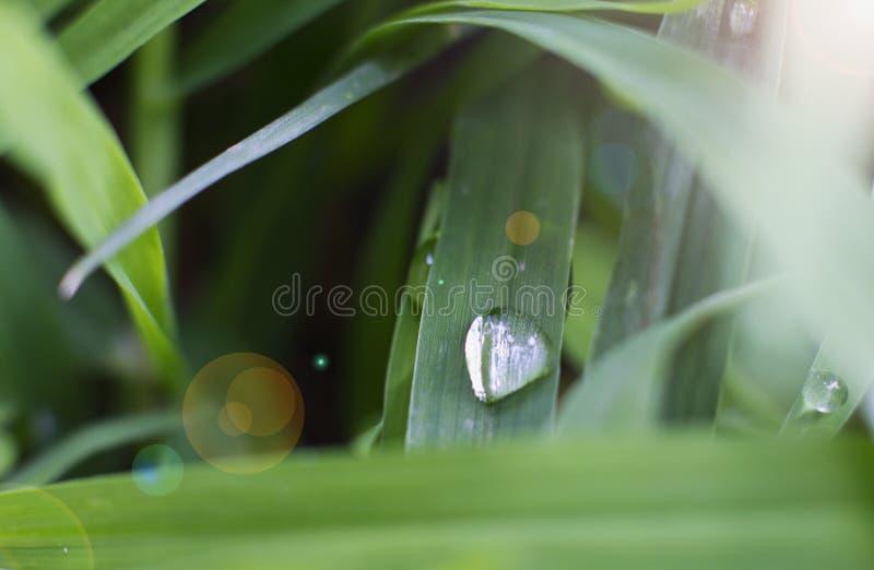 Une goutte de l'eau sur une lame d'herbe verte image stock