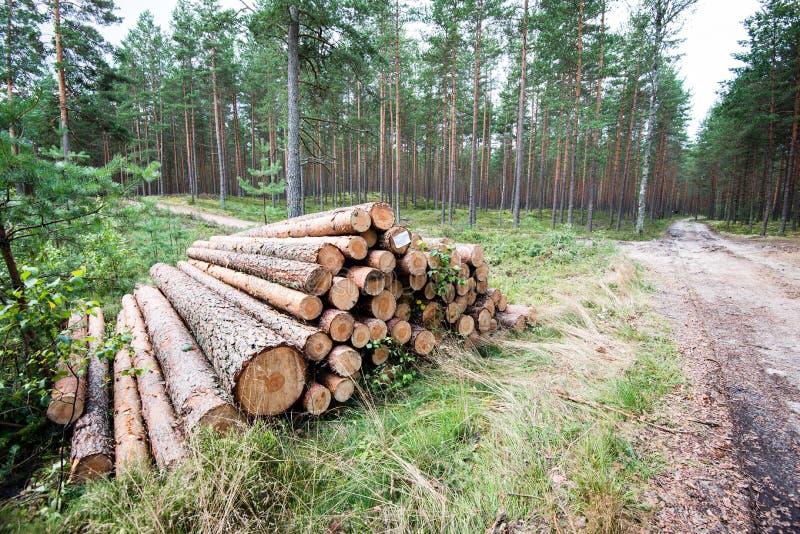 Une grande pile de bois dans un chemin forestier image stock