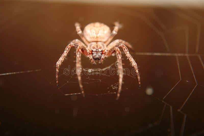 Une grande toile d'araignée pendant la nuit photo stock