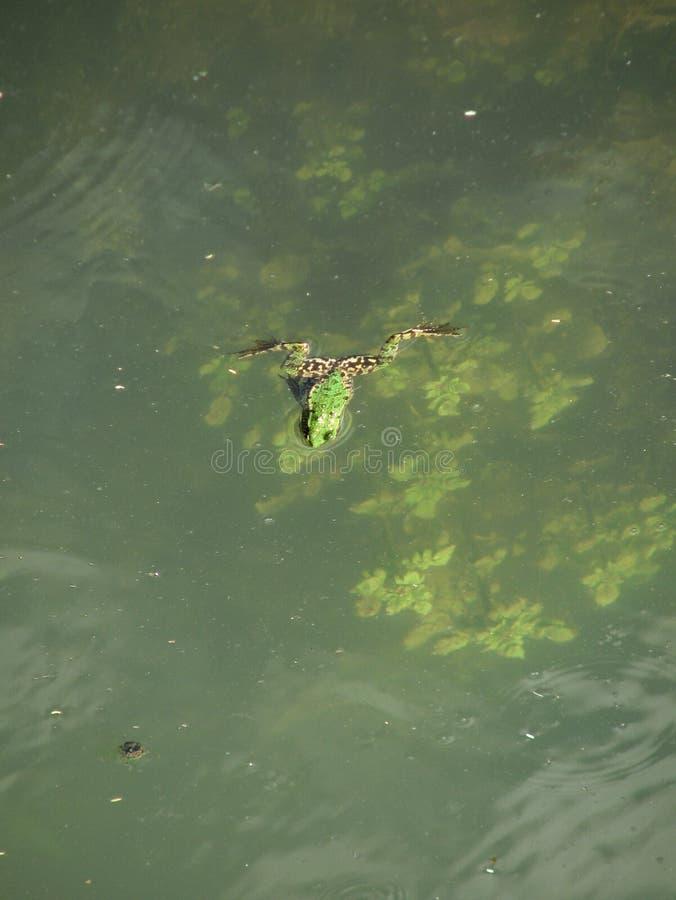 Une grenouille en Azerbaïdjan rural photo libre de droits