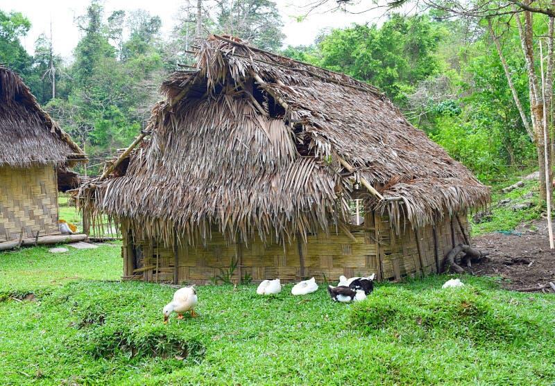 Une hutte en bois tribale pittoresque avec des canards dans l'avant et la verdure tous autour - des îles d'Andaman Nicobar, Inde photographie stock