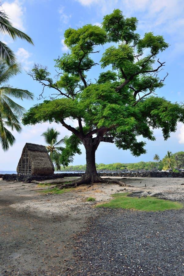 Une hutte sur la plage à l'uhonua o Honaunau de ` d'unité centrale l'endroit du refuge sur la grande île d'Hawaï photographie stock