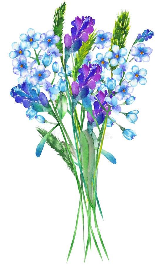 Une illustration avec un bouquet des fleurs bleues de myosotis d'aquarelle (Myosotis), des fleurs de lavande et des épillets illustration stock