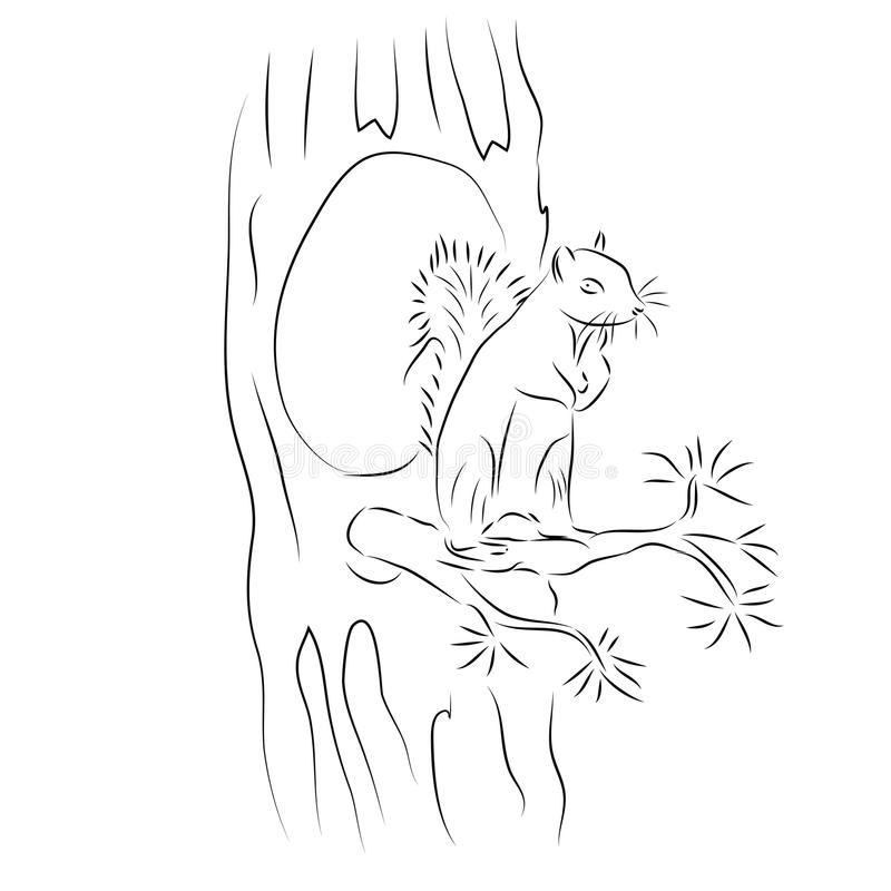 Une image d'un écureuil illustration libre de droits