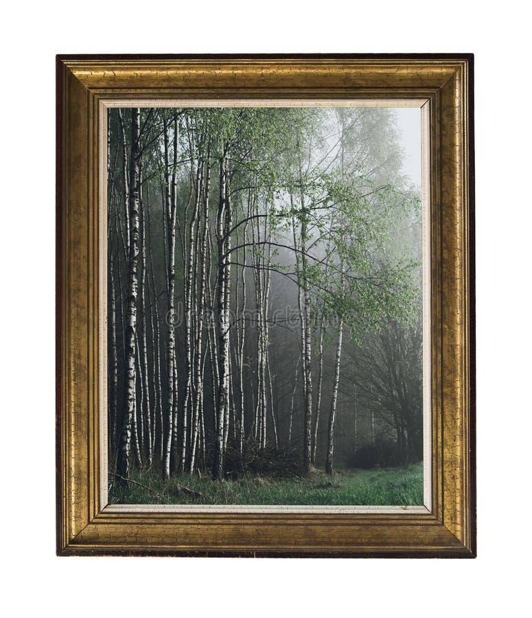 Une image d'un verger de bouleau dans un cadre de cru Cadre rectangulaire argenté de cru avec un ornement d'isolement sur le blan image stock