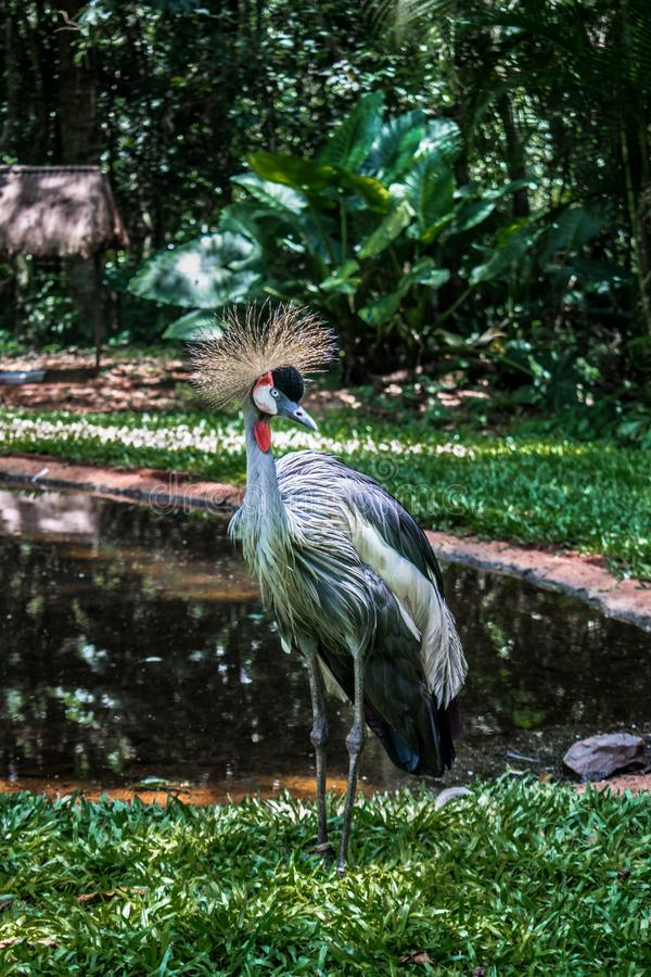 Une image gentille d'un oiseau exotique photos libres de droits