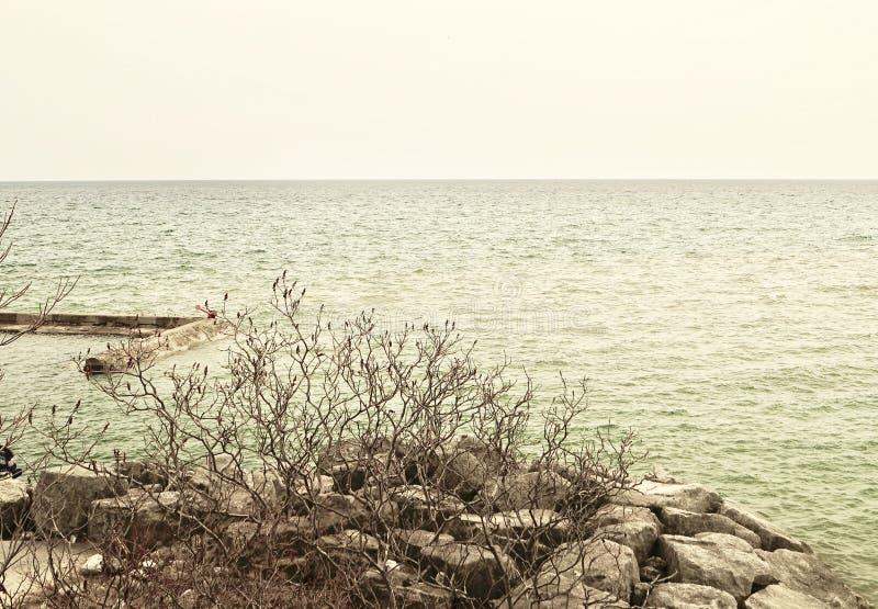 Une installation gentille des buissons sur des roches par le lac Ontario image libre de droits