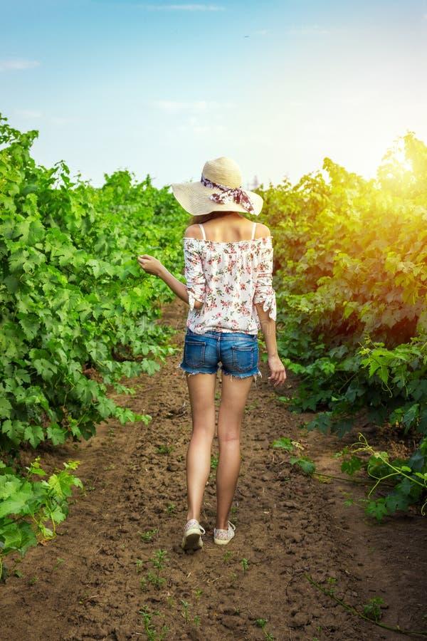 Une jeune femme de brune la marche fonctionnante de robe blanche entre un vignoble rame et en touchant les usines du raisin blanc images libres de droits