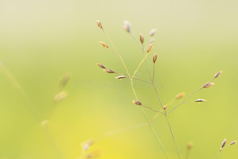 Une lame d'herbe image libre de droits