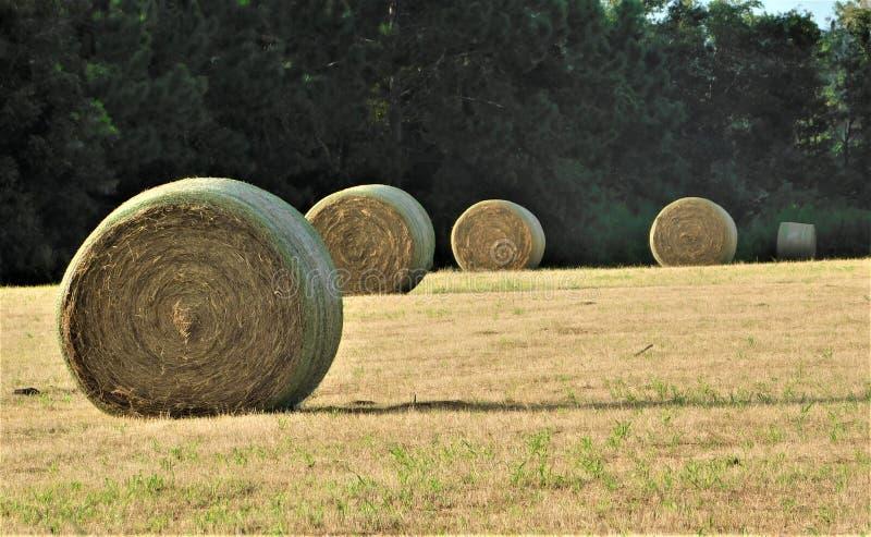 Une ligne de Hay Bales rond dans le domaine avec le contexte des arbres images stock