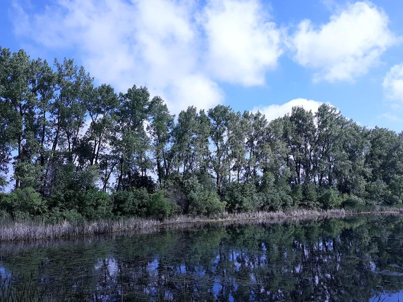 Une ligne des réflexions d'arbre avec le ciel photo stock