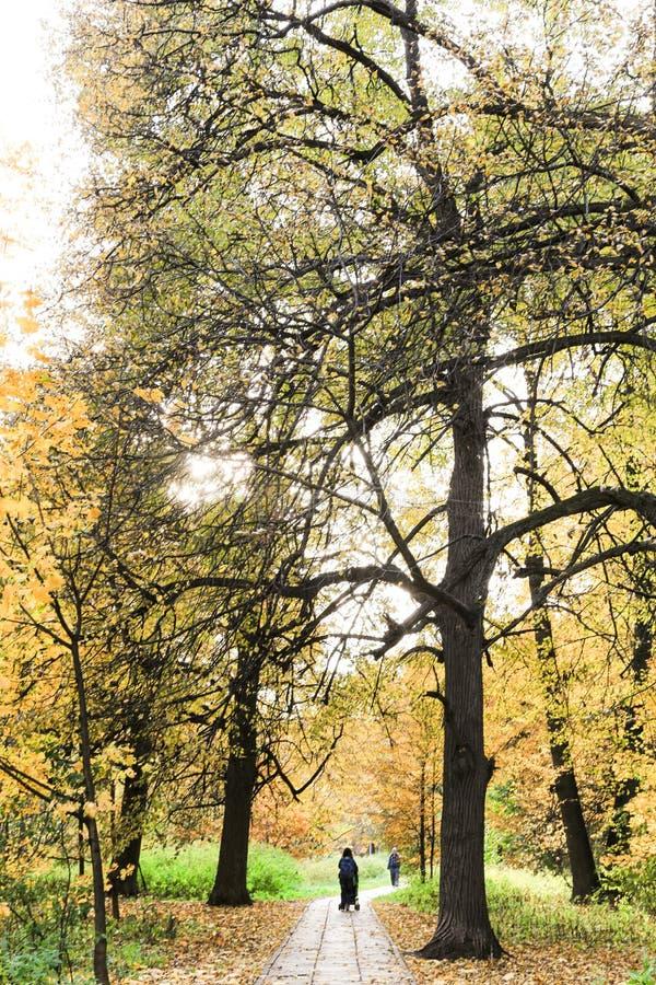 Une mère avec une poussette se promène dans le parc en automne à Moscou, en Russie Arbres colorés dans le bois, arbres rouges, ja photos libres de droits