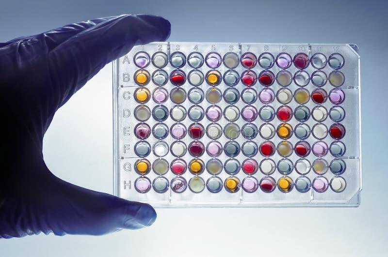 Une main avec un microplate images stock