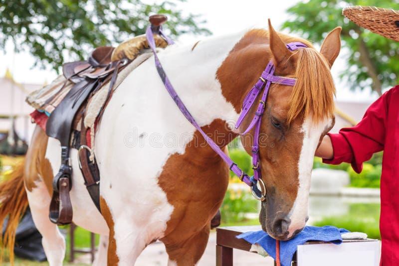 Une main de tête de cheval touchant l'amitié d'animal et de personnes de mode de vie photographie stock libre de droits